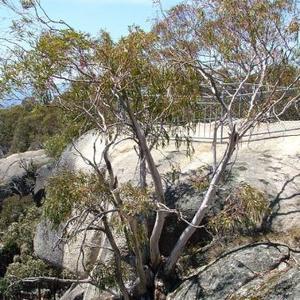 Mount Buffalo Sallee