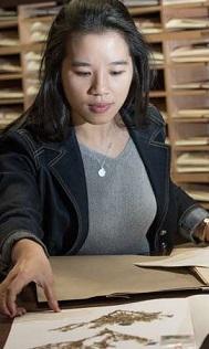 Woman studying herbarium specimens