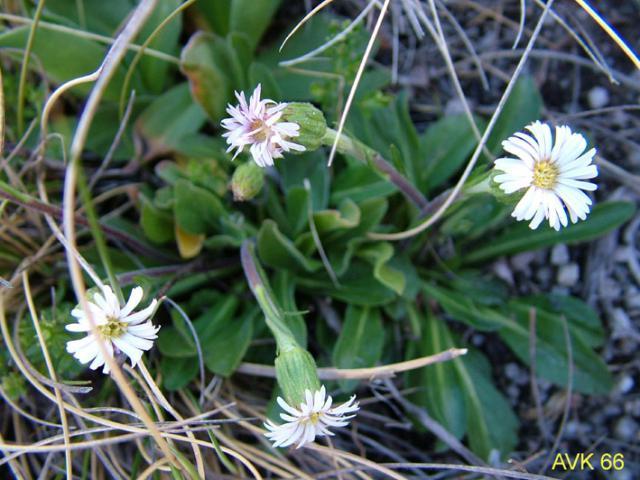 Photo of plants on Mt Buffalo, November 2006.
