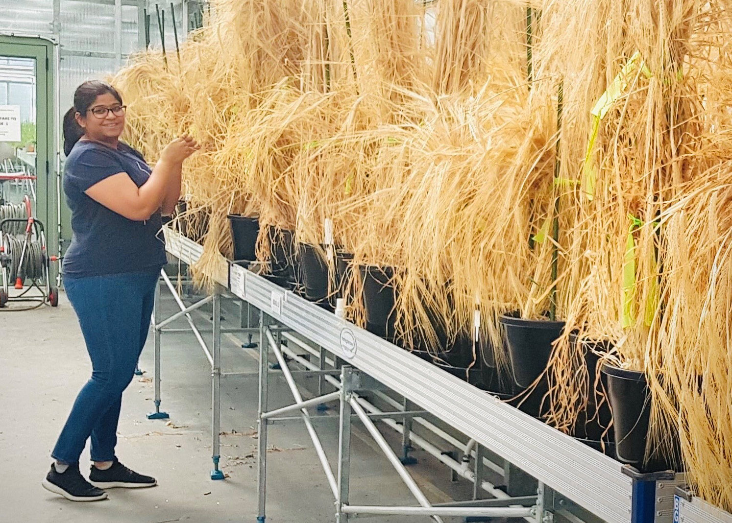 Sneha with her barley crops