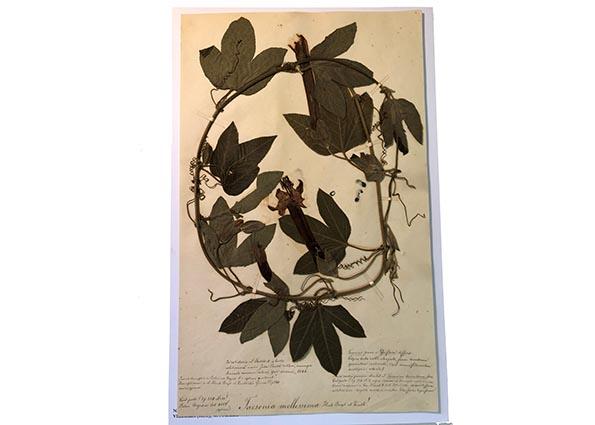 Plant specimen
