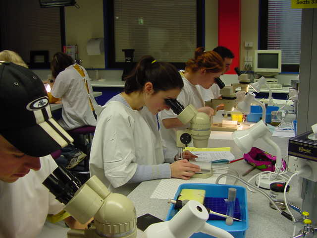 people using microscopes